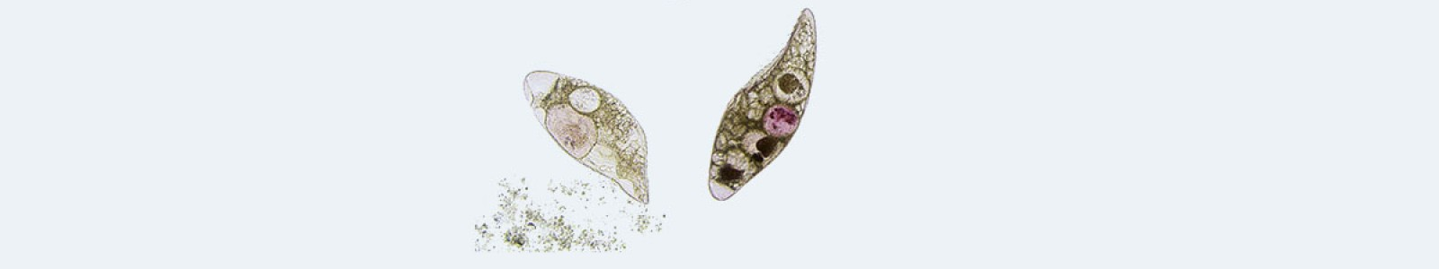 Disinfezione da funghi e protisti