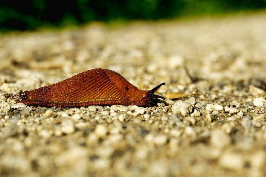 Serpenti dal giardino: come eliminarli - Comefare Fixool